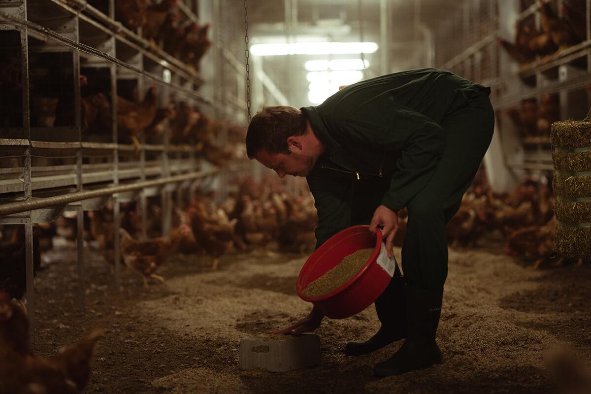 Umso intensiver müssen die Tiere nun beschäftigt werden. Dazu legt Alexander Vriesen viele Picksteine in den Stall.