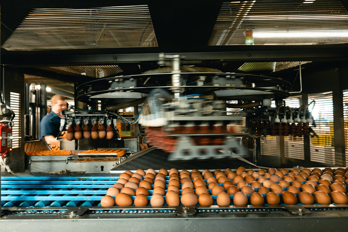 In der Packstelle werden pro Tag etwa 180.000 Eier verarbeitet.