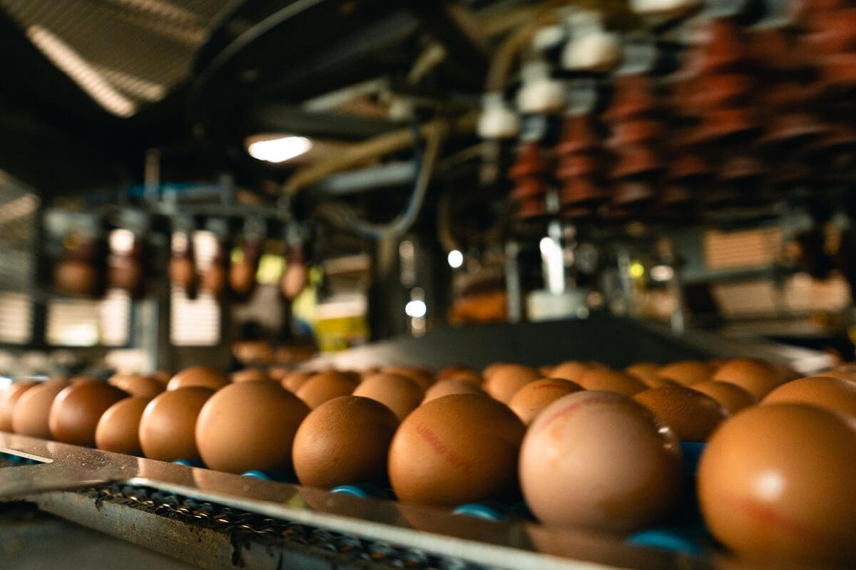 Das DE auf den Eiern steht für höchste Qualität aus Deutschland und eine gute Haltung.