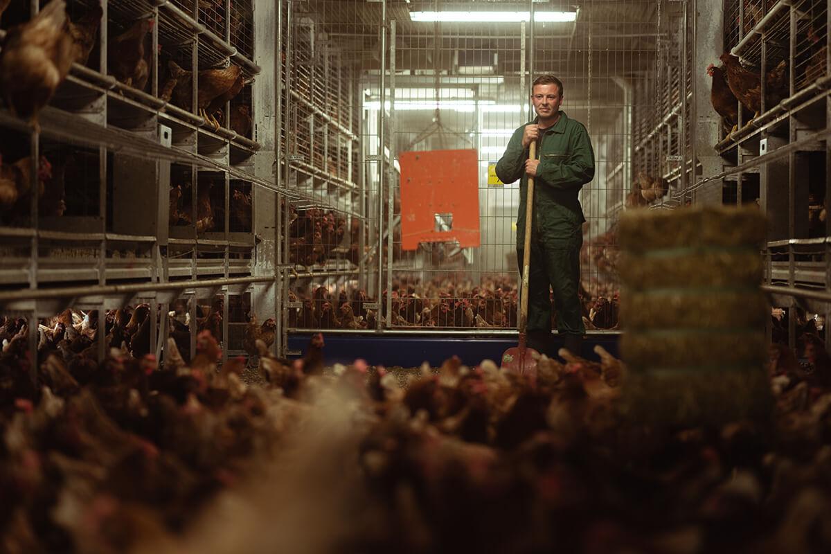 Alexander Vriesen schaut mehrmals täglich bei seinen Hennen vorbei …